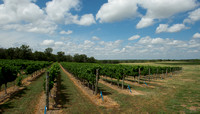 Hill Country Vineyard and Regional Imagery